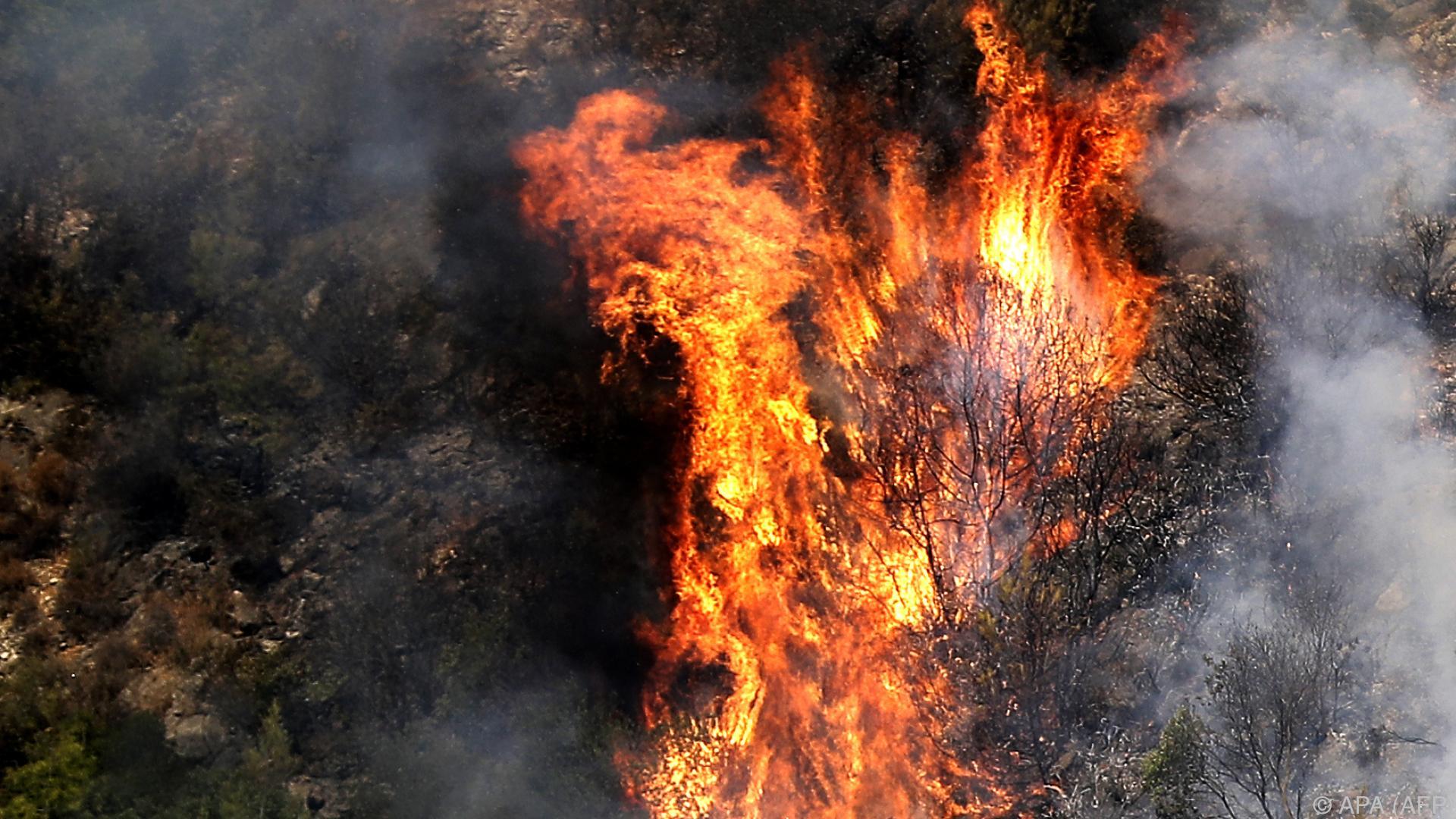 Schwerste Waldbrände im Libanon seit Jahrzehnten