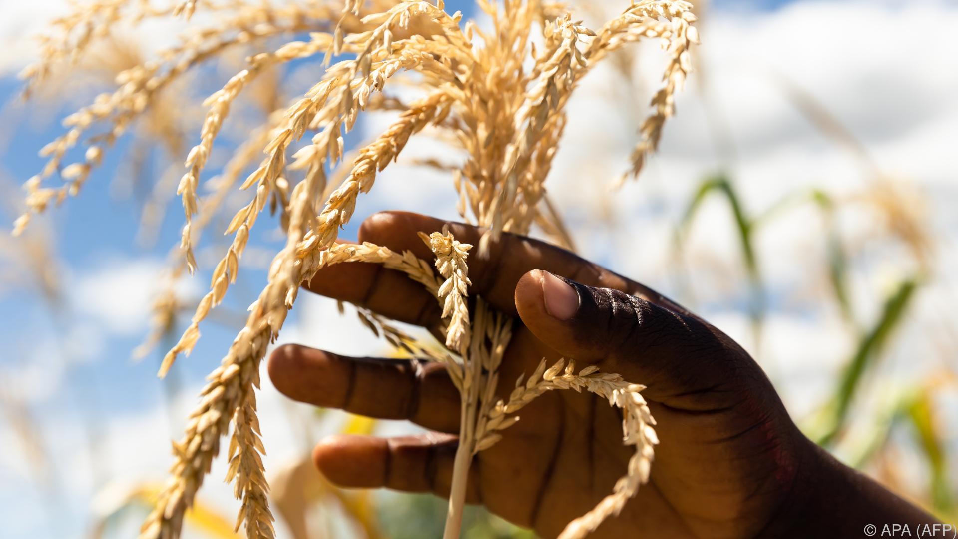 Im südlichen Afrika droht eine Hungerkatastrophe